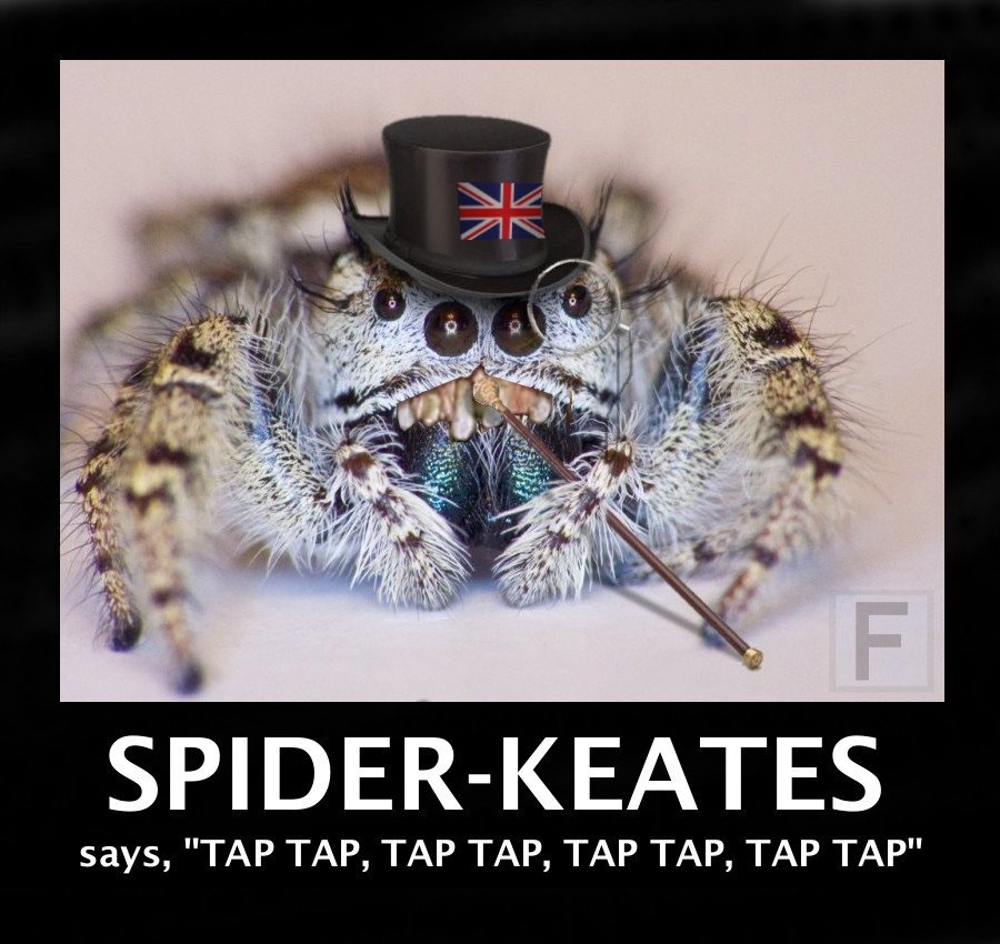 Spider Funny Videos